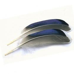 Plumas de azulon